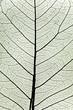 tree leaf close up