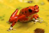 Fototapete Horizontale - Outdoors - Reptilien / Amphibien