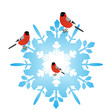 Bullfinches on a snowflake