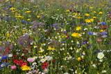 Polne kwiaty - 44372549