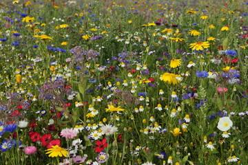 perfekte Blumenwiese grob getupft Hintergrund