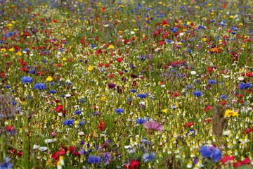 perfekte Blumenwiese fein getupft Hintergrund