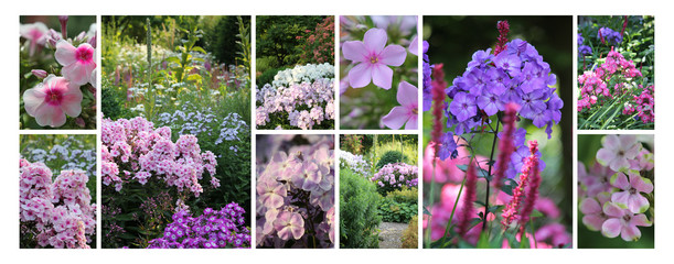 Flammenblume (Phlox) Collage