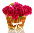 beautiful pink peonies in basket with bow isolated on white