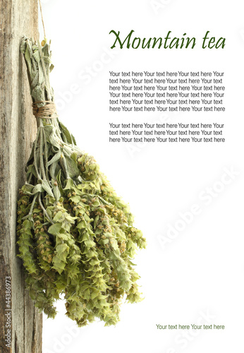 Dried mountain tea hanging from a rope with copy space