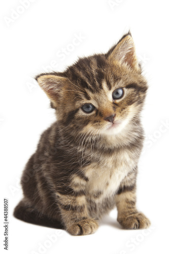 Cute kitten with shadow under paw on white background.