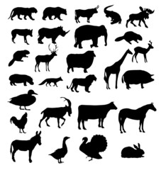 vector set of animals silhouette