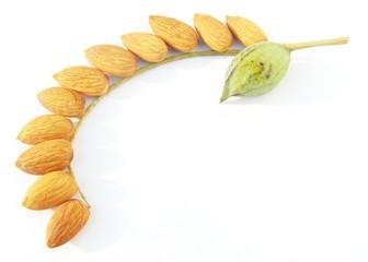 Image of whole almond nut isolated on white background