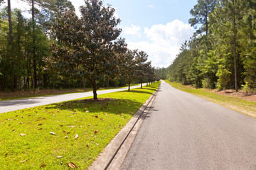 Magnolia Trees in Tallahassee, Florida