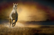 White horse in sunset