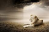 Fototapeta zwierzę - sztuka - Dziki Ssak