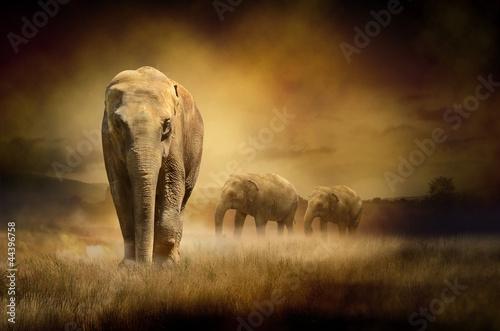 slonie-o-zachodzie-slonca-w-afryce