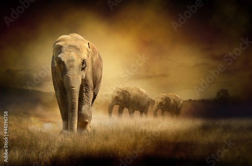 Poster Elephants at sunset