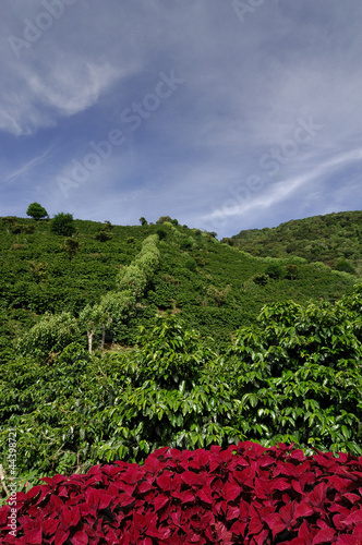 Organic coffee farm