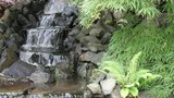 Waterfall in Backyard Zen Garden with Plants