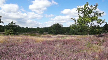 Bretziner Heide, Mecklenburg im August