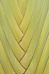 closeup of a palm tree  texture