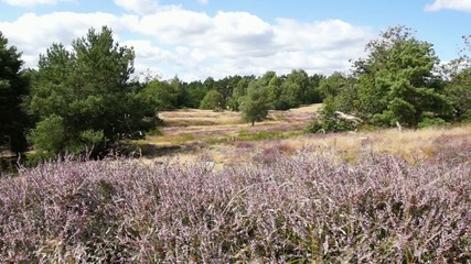Bretziner Heide im August, Mecklenburg
