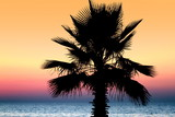 Sunset and palm tree on the beach