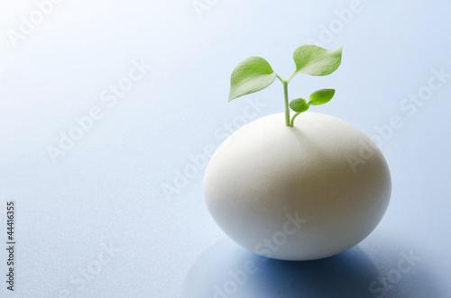たまごの芽