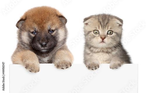 Deurstickers Franse bulldog Puppy and kitten show paws above white banner