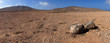 Panorama of rock and volcanic desert, Fuerteventura, Canary Isla - 44417527