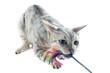 jeu de chat bengal