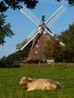Mühle 8