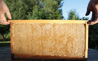 Beekeeping and  honeycomb