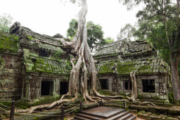 Ancient Ta Prohm or Rajavihara Temple at Angkor
