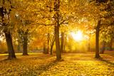 Fototapety Park im Herbst mit Sonnenstrahlen