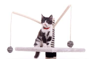 kleine junge Katze auf Kratzbaum