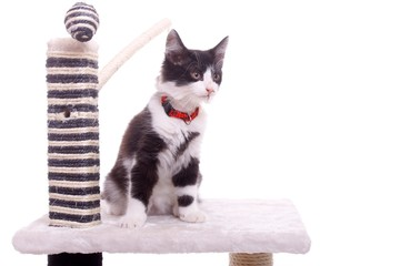 sitzende junge Katze