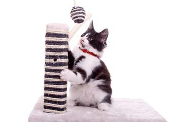 spielende junge Katze