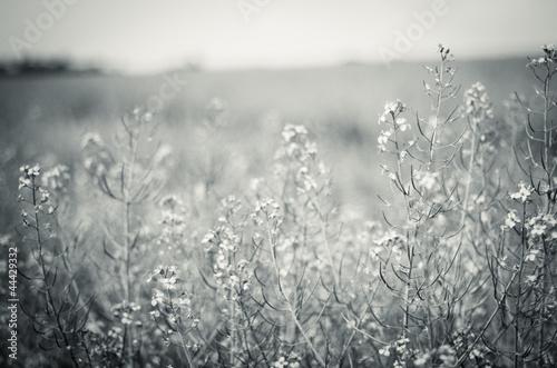 kwiaty-lakowe