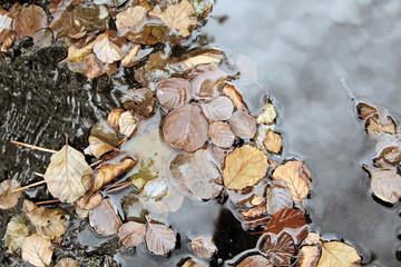 Hojas secas flotando en el agua