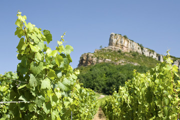 Vineyard, with Roche de Solutre. France.