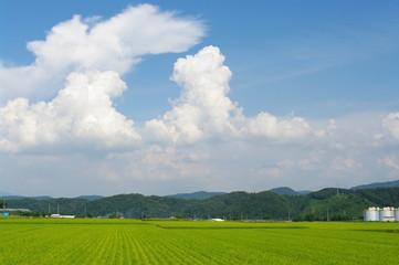 夏の空と稲田