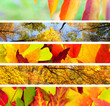 Set of  Different Autumn