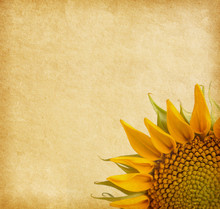 Beige . aged paper texture with sunflower