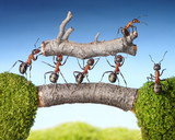 team of ants carry log on bridge, teamwork - Fine Art prints