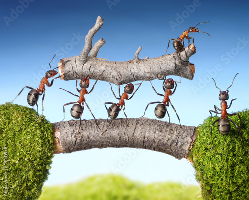 team of ants carry log on bridge, teamwork