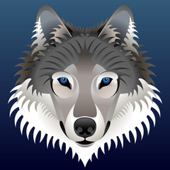 Realistic wolf's face. Vector wolf head front view