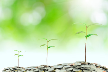 Tree growing on moneys with green background