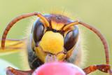 Fototapete Natur - Makro - Insekten