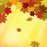 Colorful fall vector background with maple leaves .