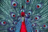 Fototapete Abstrakt - Colorful - Nutztiere