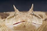 Fototapete Schlange - Snakes - Reptilien / Amphibien
