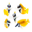 reef fish, yellow rabbitfish isolated on white background