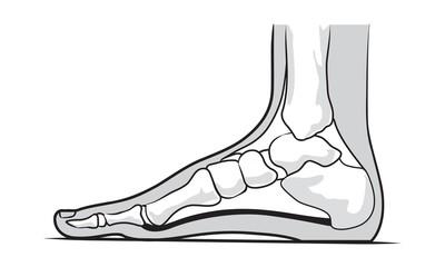Medial foot anatomy
